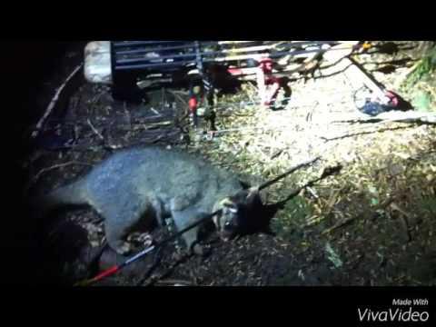 Possum Hunting Nz