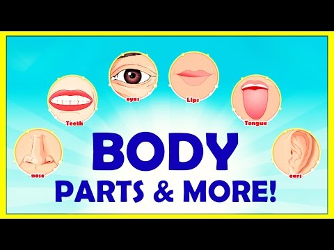 Learn The Names Of BODY PARTS + More | Educational Videos For Kids | KidsClassroom