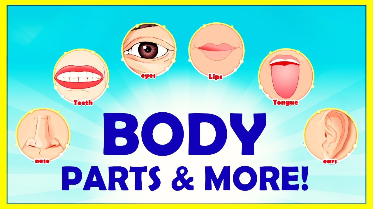 Learn The Names Of Body Parts   More