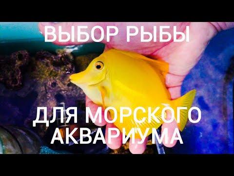 Вопрос: Какая форма рыб в аквариуме смотрится смешно и нелепо или таких нет?