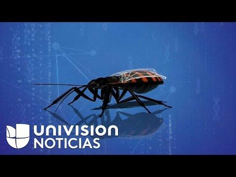 Chagas: una enfermedad en aumento en Estados Unidos