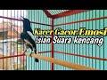 Burung Kacer Gacor Ngotot Emosi Tembakan Isian Cililin Suara Kencang  Mp3 - Mp4 Download