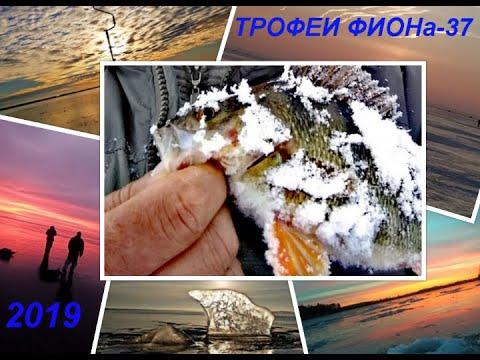 ТРОФЕИ ФИОНа 37-2019