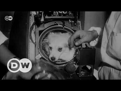 Laika: Uzaya Giden Ilk Dünyalı - DW Türkçe