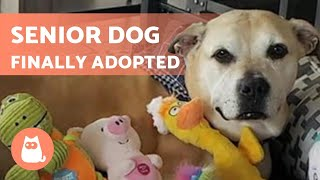 This 12-Year-old DOG is ADOPTED After 6 YEARS Waiting 🐶🐾