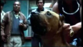 My Amores Perros Trailer thumbnail