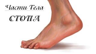 Как Рисовать Ноги, Стопы | Adobe Photoshop