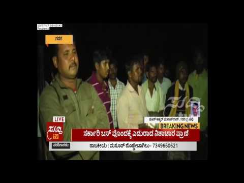 Gadag : An Allien Creature Animal To Be Found, Villagers Fearing | ಸುದ್ದಿ ಟಿವಿ