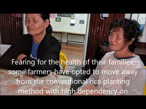 Green Living the organic SRI rice farming way