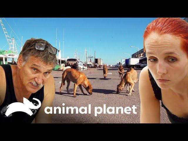 La difícil decisión de sacrificar a una perrita | Dr. Jeff, Veterinario | Animal Planet