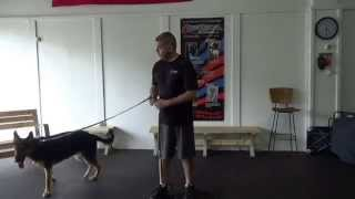 "German Shepherd ""pablo's"" Obedience Transforms With Off Leash K9 Training, Maryland"