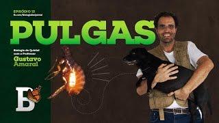 Biologia de Quintal - Pulgas