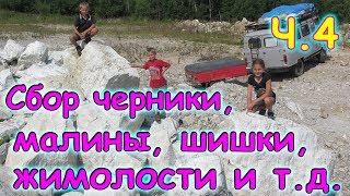 В тайгу за черникой, малиной, смородиной, шишкой и т.д. ч.4 (08.17г.) (рел.) Семья Бровченко.