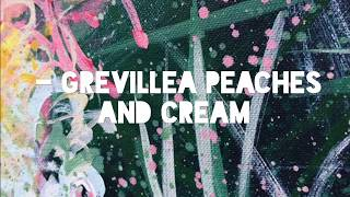 Courageous Love - Grevillea Peaches And Cream -By HSIN LIN ART / @Helloinnerpeace / Timelapse Video