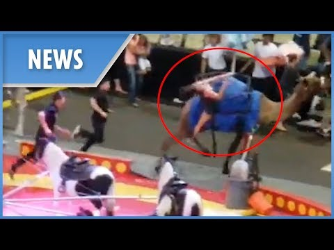 Several injured after a CAMEL goes amuck at circus