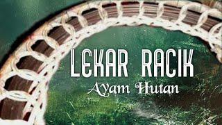 LEKAR RACIK AYAM HUTAN // SARUNG RACIK // PERUMAH RACIK