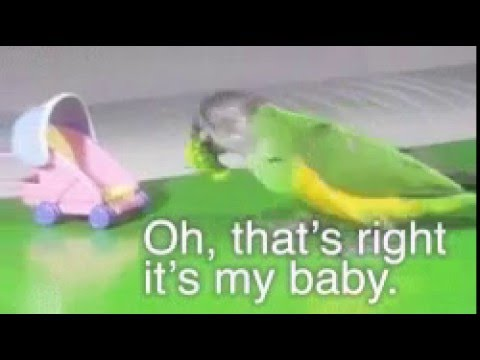 Parrot GIF funny
