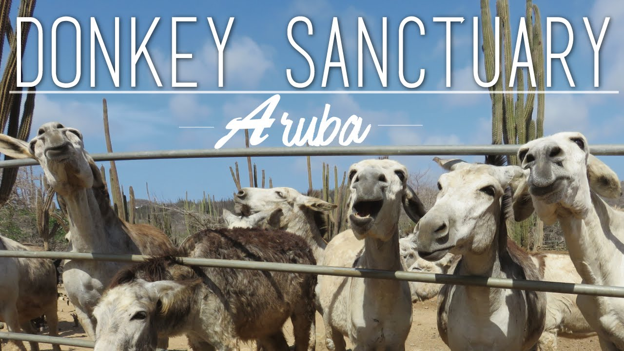 Things To Do In Aruba | Donkey Sanctuary - YouTube