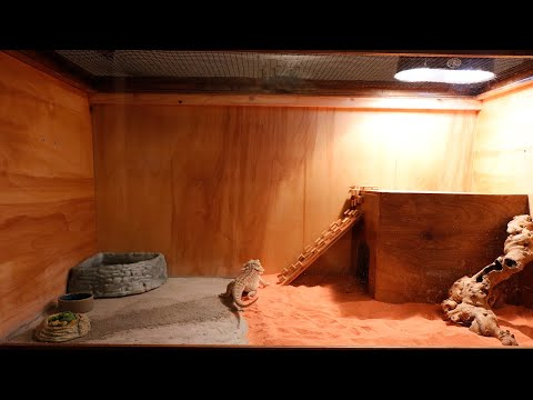 bearded-dragon/reptile-enclosure-build