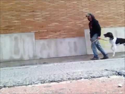 How To Teach A Dog To Walk Backwards