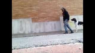 Teach Dog To Walk Backwards, Heel Dog. Brooklyn Dog Training, Nyc