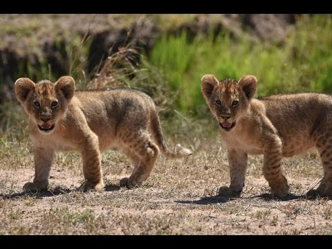 Cute Wild Baby Animals - YouTube