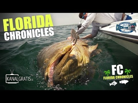 Florida Chronicles - Giant Goliath Grouper | ft. Chew On This & Kanalgratis.se also BlacktipH