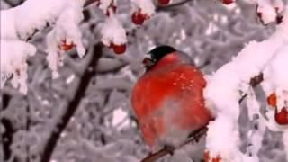 """Птицы зимой""."