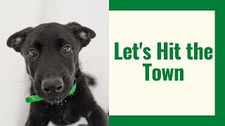 Taking Our New Puppy to Town | Grassroots K9