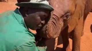 Odd Ball Couples- Animals Documentary Part 1