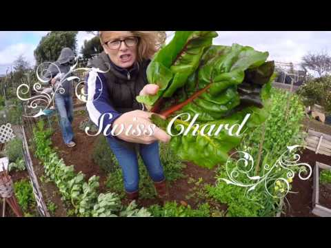Erin's Organic Garden - Jan/Feb 2016 - Santa Monica, CA