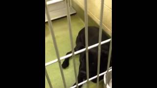 Gaucho ID#A427671 - 10 mth old owner surrender at Moreno Valley Shelter