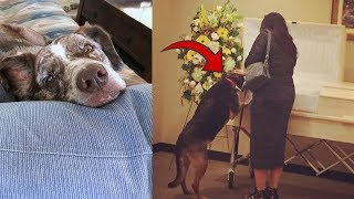 This Family Tense Up Instant Dog Looks Into Owners Casket To Make Earth Shattering Revelation