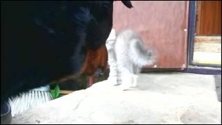 Котик без имени ловит бабочку