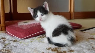 とてもかわいい系・癒し系・おもしろ系の猫動画です。 サポートしていた野良猫(地域猫)ノーラの子供達です。 一度はノーラの不妊手術を予約...