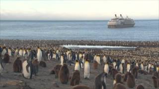 Antarctique et Georgie du Sud VF