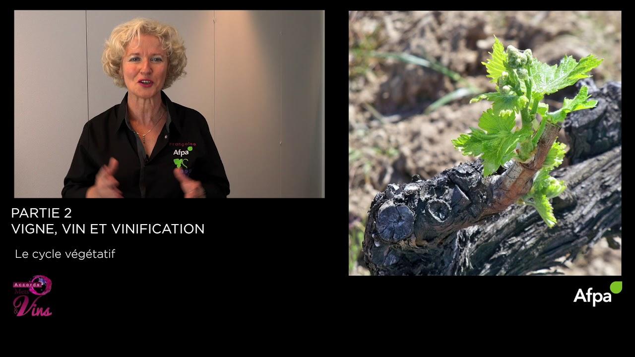 UA2  - Vidéo 1 -  Le cycle végétatif de la vigne