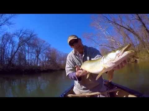 Musky Fishing On The French Broad River NC | March2015 | GoPro
