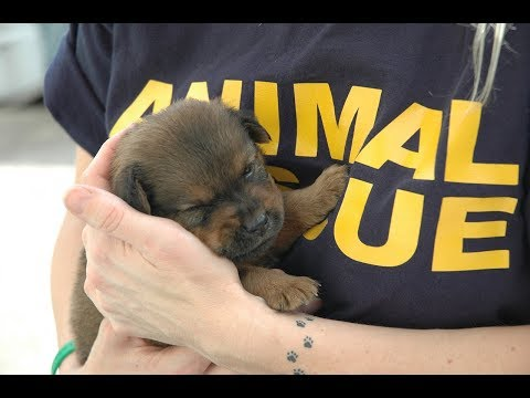 Did you know live 200k subscriber celebrety - animals rescue stories 2