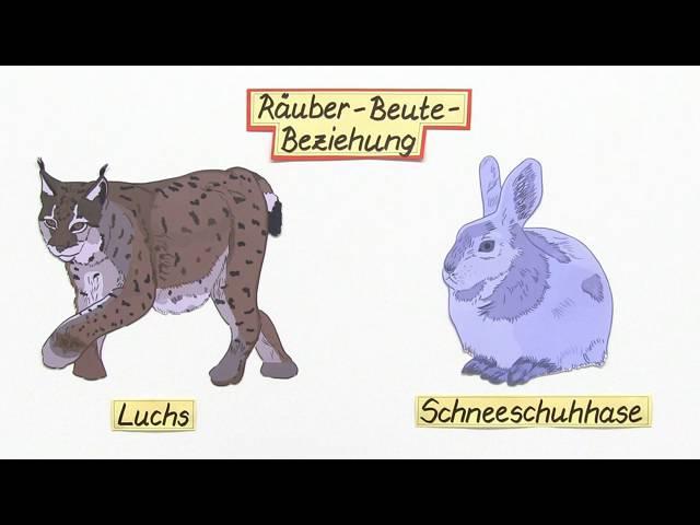 RÄUBER-BEUTE-BEZIEHUNG   EINE DYNAMISCHE WECHSELWIRKUNG   Biologie   Ökologie