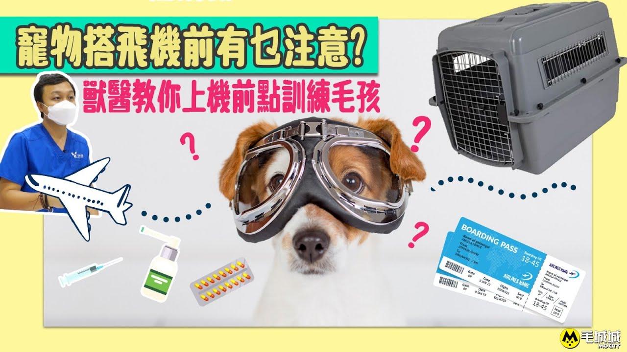 【寵物移民】寵物搭飛機前有乜注意? 獸醫教你上機前點訓練毛孩 醫生: 打鎮靜劑我們很少做 - YouTube