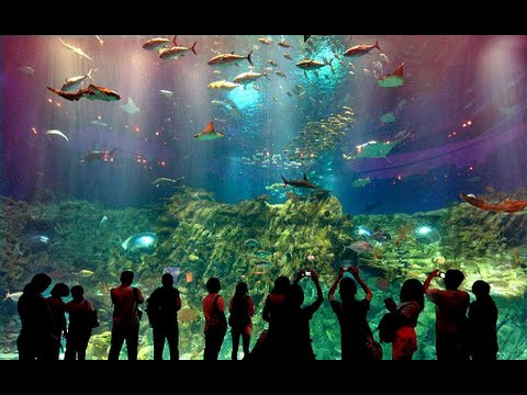 Ocean Park Hong Kong, Theme Park in Hong Kong - Best Travel Destination