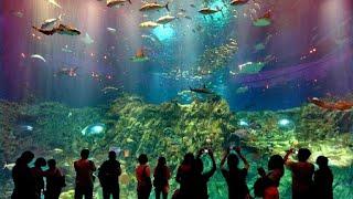 Ocean Park Hong Kong, Theme Park in Hong Kong - Best Travel Destination