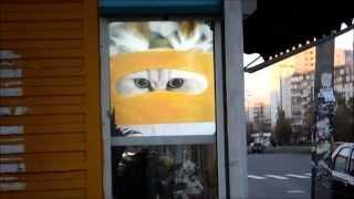 Рекламный экран на Кочетовском Рынке(Размещение рекламы фото и видео. Рекламное агенство