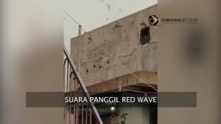 Testimoni Suara Walet Original BAN Red Wave