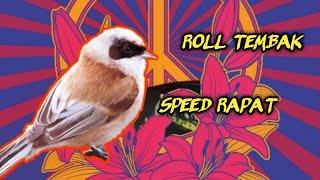 HD Audio Suara Burung Masteran Roll Tembak Burung Kecil Gacor