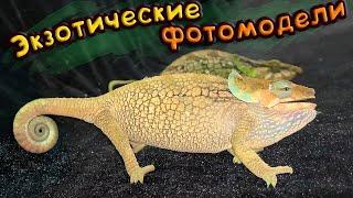 ФОТОСЕССИЯ ЯЩЕРИЦ