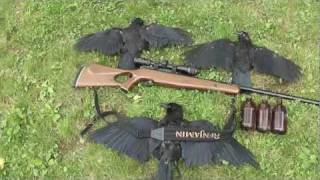 Air Rifle Crow Hunt 2 Thumbnail