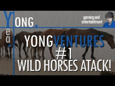 Yongventures: WILD HORSES RAID THE CAMP!