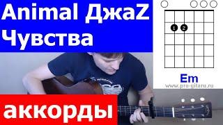 Animal Джаз Чувства аккорды под гитару 🎶